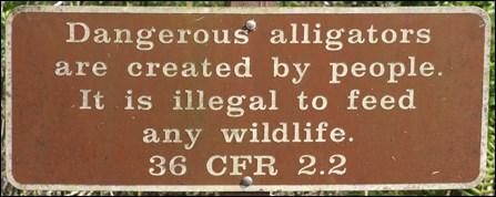 Dangerous Alligatots