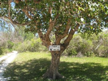 Poisonwood Tree